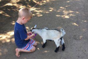 Animal Farmyard-image-2